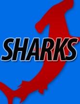 Shark fin - online extra