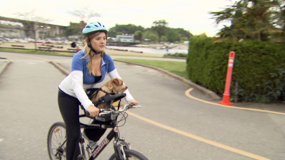Dog Carrrier For Bike Sold In Canada