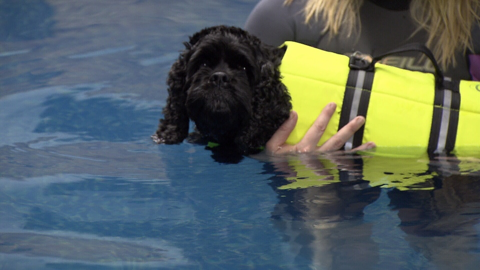 The dog pool at Aqua Paws is a swimming pool designed for hydrotherapy for your canine companion.