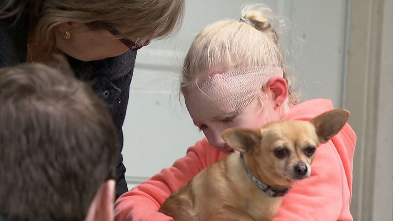 Jenna Desrochers hugs the Chihuahua who saved her from a pit bull attack last week in Chilliwack, B.C. March 26, 2013. (CTV)