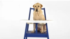 Swedish furniture maker Ikea released its newest product via YouTube video: The Hundstol, or dog highchair.