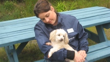 """Miracle May"" with Sunshine Coast SPCA manager Shannon Broderick. The toy poodle was dropped onto the grounds of a B.C. care home on May 2, 2011. (SPCA)"