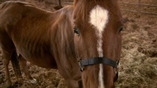 Emaciated horses seized