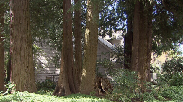 Vancouver property lined with trees