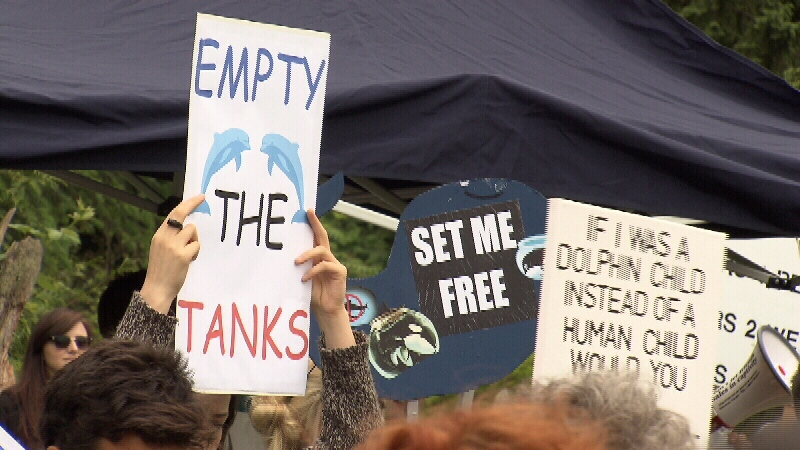 Protesters gathered at the Vancouver Aquarium May 24, 2014. (CTV)