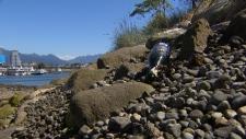 Empty bottle on 'Beer Island'