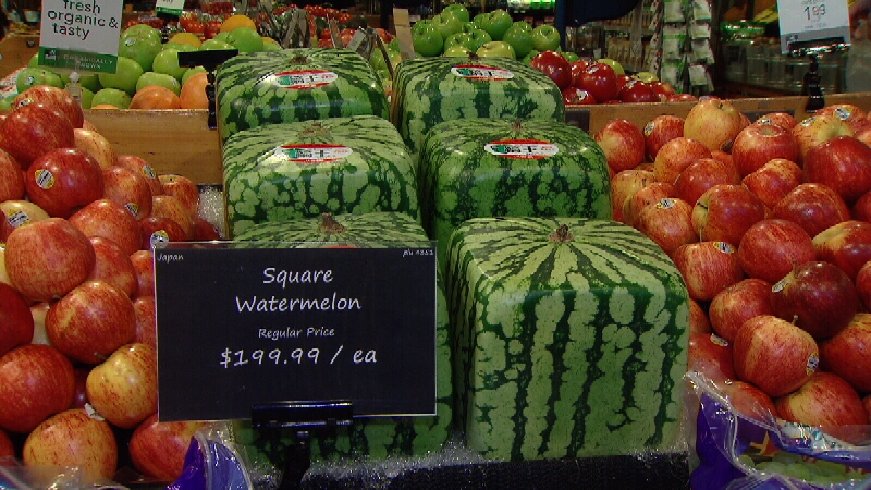 200 square watermelons are selling despite the price tag - Square watermelons how and why ...