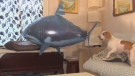 CTV Morning Live Smile: A dog takes on a shark and a baby deer just wants its belly scratched.