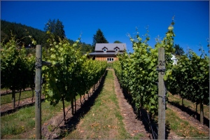 Valley, mountain and ocean views are the star of this 10-acre Salt Spring vineyard, listed at a cool $2.7-million price tag. Realtors say the area shares the same micro-climate as the Loire Valley in France. (Photo credit: Li Read)