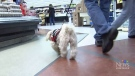 CTV Vancouver: Dog therapy helping veterans