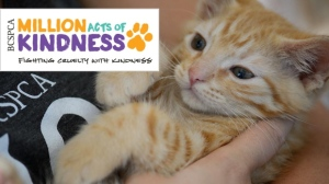 BC SPCA Million Act of Kindness