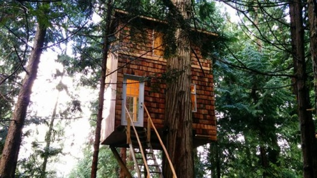 how to build a livable treehouse