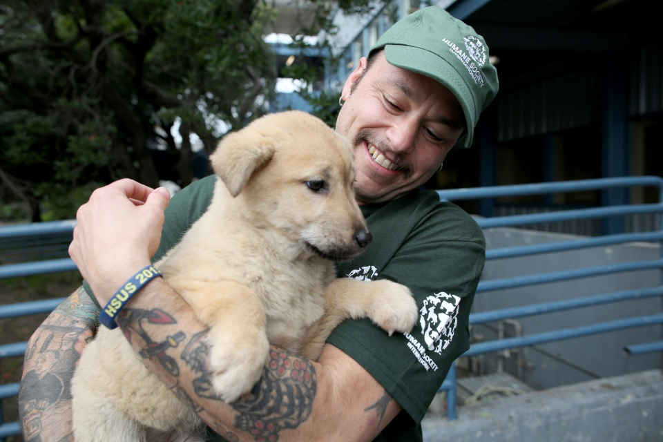 In this image released on Thursday, March 19, 2015, 57 dogs rescued by Humane Society International and Change for Animals Foundation from a dog meat farm in Hongseong, South Korea, arrive in San Francisco. (Sammy Dallal/AP Images for Humane Society International)