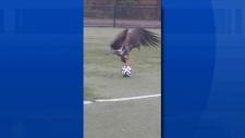 eagle soccer