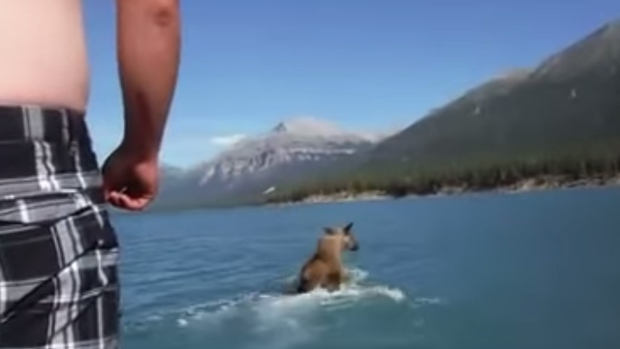 A man was captured on video jumping on a moose as it waded across a river. (YouTube)