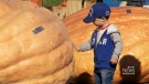 CTV Vancouver: Battle of the giant pumpkin attracts growers