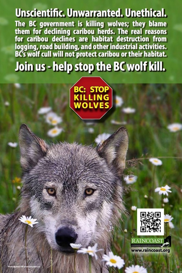 The Raincoast Conservation Foundation ads called B.C.'s wolf cull unscientific, unwarranted and unethical.