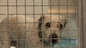 CTV Vancouver: Support pours in for seized pups
