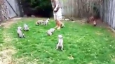 Puppies trained to pee on command