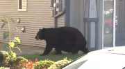 Mom, toddler charged by black bear
