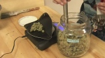 Fined pot shops to fight Vancouver City Hall