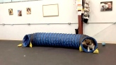 Tunnel provides endless loop of fun for pups