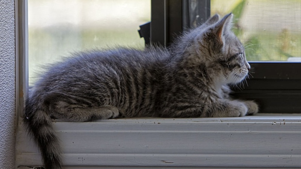 Take a look inside the Vancouver Branch of the SPCA and the Surrey Education & Adoption Centre.<br><br>