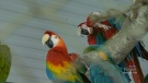 World Parrot Refuge in Coombs under investigation