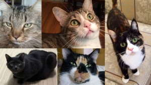 Did you know that June is Adopt-a-Cat Month? Each spring, thousands of newborn kittens end up in shelters across North America. 