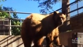 Bear nicely asked to leave dumpster, complies