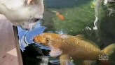 Unlikely pair: Dog and fish share friendly kiss