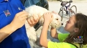 CTV Windsor: Dog rescue