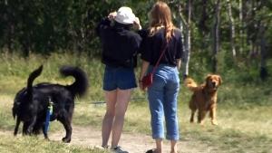Fetching a dog walker?