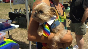 More than 150 dog lovers and their best friends took part in the popular and long-running Big Gay Dog Walk on Victoria's Dallas Road waterfront as part of the city's Pride week celebrations. Sunday, July 3, 2016. (CTV Vancouver Island)