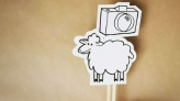 Google sheep view? Flock fitted with 360 cameras