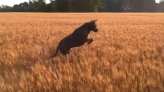 Is this bouncing dog the world's happiest pooch?