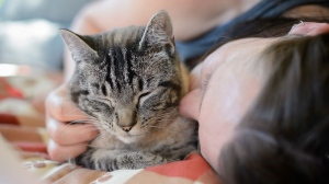 Looking to expand your family? The BC SPCA hopes to clear out some shelter spaces, offering 50 per cent off adoption fees for cats.
