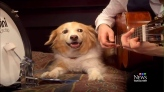 Musically gifted dog keeps tempo on drum