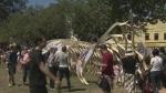 Festival celebrates Japanese culture