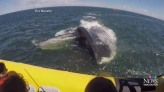 Close encounter: Tourists get up close with whale
