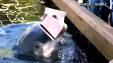Cheeky dolphin takes a bite out of iPad