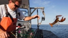 Scott Beede returns an undersized lobster while fishing in Mount Desert, Maine, May 21, 2012. (AP / Robert F. Bukaty)