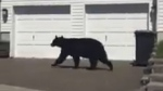 Residents spar with city over bear problems
