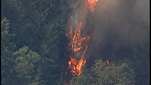 Flames engulf trees along the Trans-Canada Highway near Mill Bay as crews battle a wildfire. Aug. 25, 2016. (CTV Chopper 9)