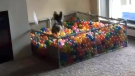 Dog goes bonkers for personal ball pit