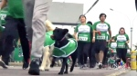 Dogathon welcomes canines in marathon