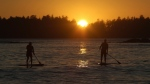 Paddlers are seen during a sunset at the end of the day of the first annual West Coast SUP Symposium in Tofino, B.C., Saturday, October 3, 2015. THE CANADIAN PRESS/Chad Hipolito