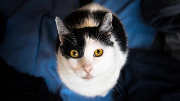 Winnipeg Cat Adopt
