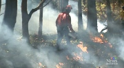 B.C. island burned in hopes of new growth