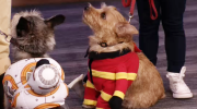 Halloween costumes for your four-legged friends